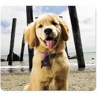 Fellowes Recycled Mouse Pad Puppy At Beach